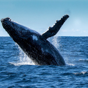 Analysts Say Whales' Presence Is About to Get Larger