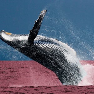 Ethereum Whales Kicks Off Crypto Market Downturn With 4000 ETH Dump