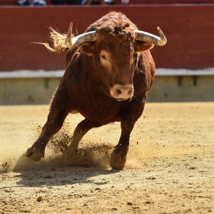 Bitcoin Dominance Soars Above 55% After Meteoric Rise to 2019 High