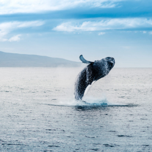 "Bitcoin Whales Play ""Liquidation Games"" as Analysts Eye Buyer Activity at Key Support"