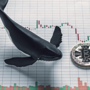 "Bitcoin Bears Are ""Emotionally Broken"" as Whales Stack Massive Buy Orders"