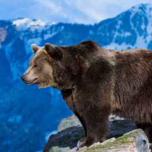 Analysts Believe Bitcoin Likely to Move Towards $6,000 as Bearish Narrative Unfolds