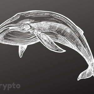 Bitcoin Whales Are Back to Accumulating Despite Price Plunge