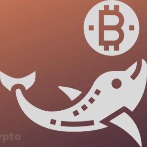 As Bitcoin Nears $10k, Whales Look to be Loading Up for Another Pump and Dump